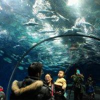 Пекинский Океанариум... :: Александр Вивчарик