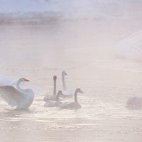 Лебединая Камчатка :: Денис Будьков