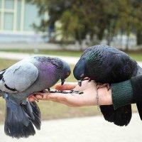голубушки :: Анастасия Андреева
