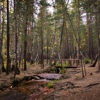 Лесной ручей :: Алексей Большаков