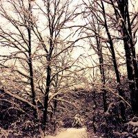 Дорога в лесу :: Мария Лапшина