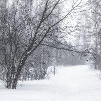 парк зимой :: Светлана Видякина