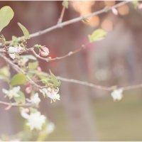 Весна......... :: Виктория Иманова