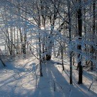 ...тень и свет... :: Андрей Гр