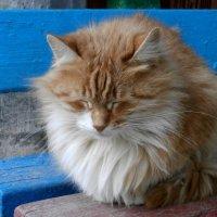 Круглый кот,пригревшись на солнышке, видит сладкий сон :: Dr. Olver