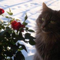 ... а за окном зима... :: Mariya laimite
