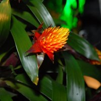 выставка цветов :: susanna vasershtein