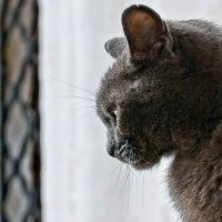 Кошачий сфинкс :: Евгений Жиляев
