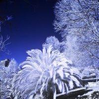 IR Зима в Лиссабоне :: Almantas B