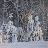После снегопада :: Виктория Пашкова
