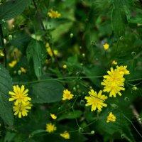 цветы :: Mika Meier
