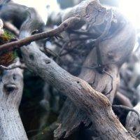 дерево :: Екатерина Иванченко