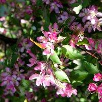 Розовые цветы :: Александр Килямов