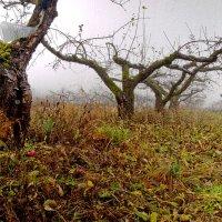 Поздняя осень :: Almantas B