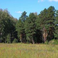 Приупский лес :: Александр Килямов