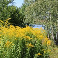 Жёлтые цветы :: Александр Килямов