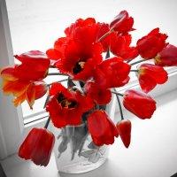 Красные на белом :: галина ваулина