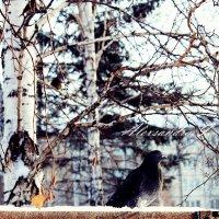 Зимний пейзаж :: Александра Ивасенко