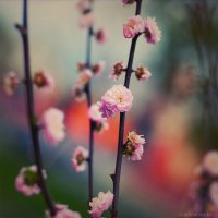 lovely flowers :: Ирина Марьенко