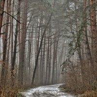 Туманный день в марте :: Игорь Мукалов