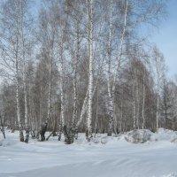 Зима... :: Вадим Кузнецов