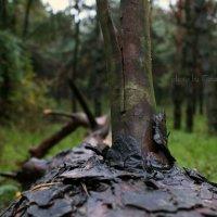 лес :: Евгений Кравченко