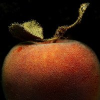 Про яблоко :: Валерия заноска