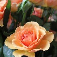 Роза :: Юлия Тулаева