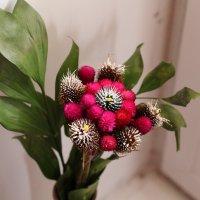 Цветок :: Алла Шупик