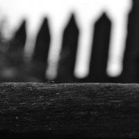 Маленький муравей :: Віталій Павук