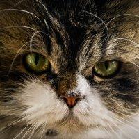 2 кота :: Елисей Голубев