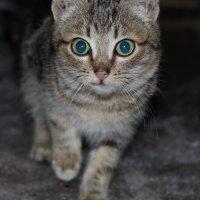 Снежный кот :: Диана Каргина