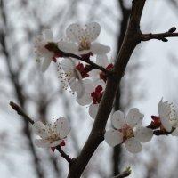 Весна :: Света Насонова