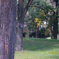 Деревья :: Наталья и Игорь Трошкины