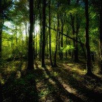 Осенний лес в долине р. Шахе :: Алексей Вуколов