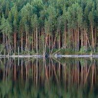 Лес стеной :: Александр Сивкин