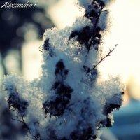 по моему мнению-это очень красиво:) :: Александра Ивасенко