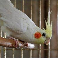 Птичка :: Александра Ивасенко