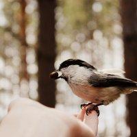 Птица :: Эвелина Аксёнова