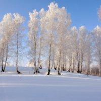Зима продолжается... :: Николай Мальцев