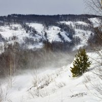 маленькой елочки холодно зимой... :: Maxxx©
