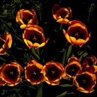...тюльпаны... :: Андрей Гр