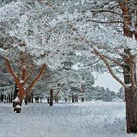 Серебряные кружева зимы :: Николай Белавин