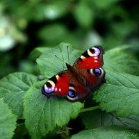 осенняя красавица :: Александр Голуб