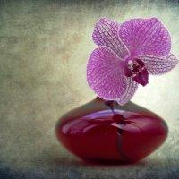 Цветок в вазе. :: Анна Тихомирова