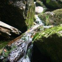 Йелений поток :: Максим Красиков