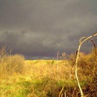 В степи перед грозой :: ольга хадыкина