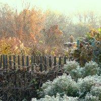 Утро морозное,утро осеннее. :: ольга хадыкина