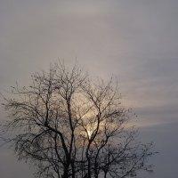 холодное солнце :: Лана Lana