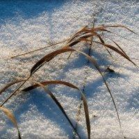 ...на снегу... :: Андрей Гр
